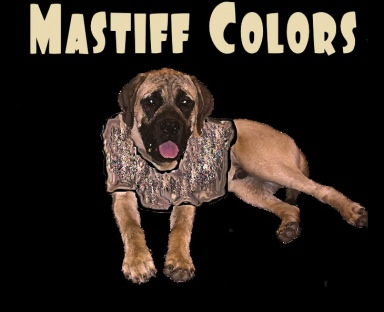 Mastiff Colors