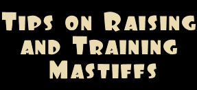 tips_on_raising_and_training_mastiffs.jpg